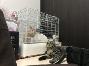 猫とうさぎの共存
