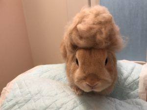 うさぎの抜け毛